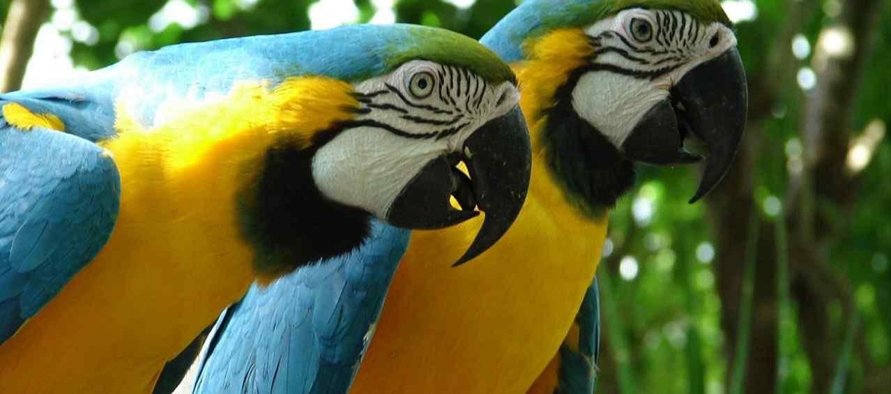 Exotic Tamed Birds Pet Shop  Macaws,Exotic Birds For Sale Pet Services