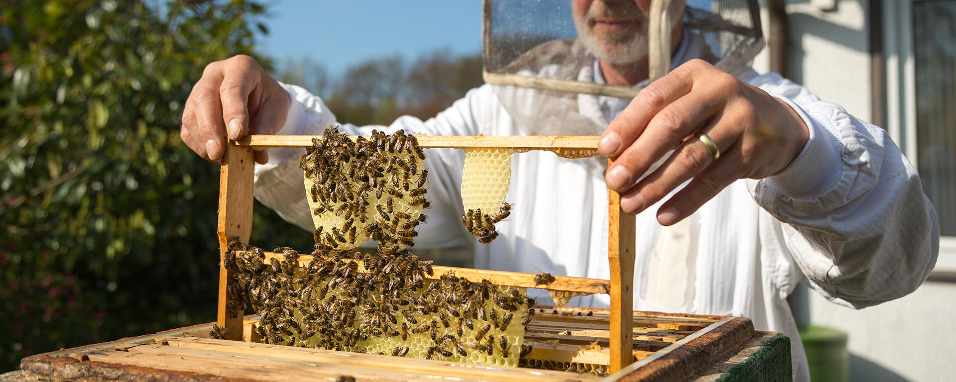 Bee Multiplication and Queen Grafting Services | BeeHively