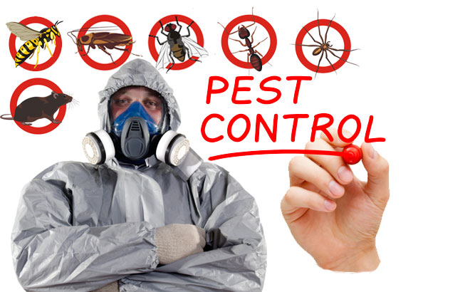Best pest control and termite control in GurgaonBest pest control and termite control in Gurgaon