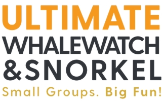 Ultimate Whale Watch & Snorkel